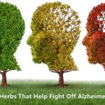 Medicinal Herbs to Fight Off Alzheimer's Disease
